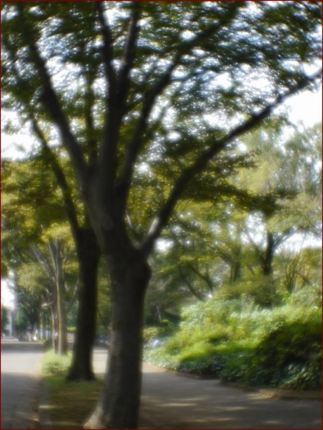 Yasuhara Momo soft focus lens sample image